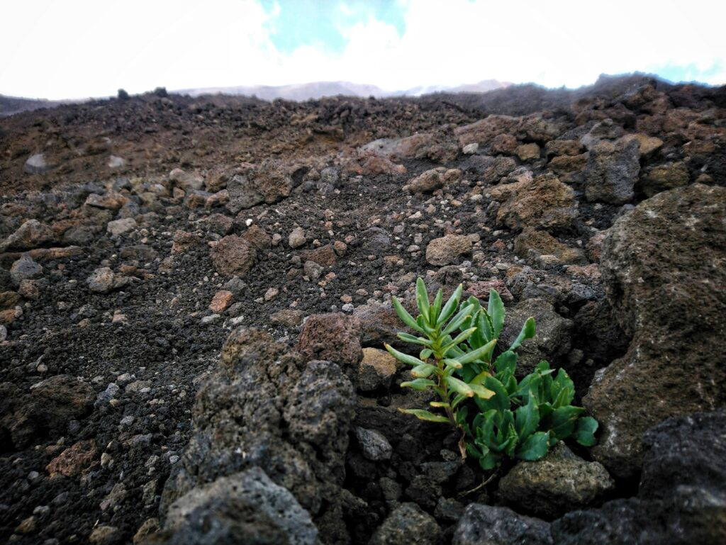 A little plant in the middle of nowhere on Mount Etna Sicily Italy